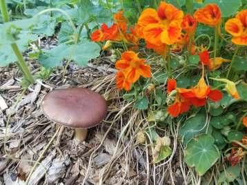flowersshrooms